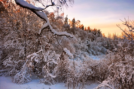 Winter sunset near the forest photo