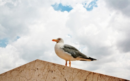 gracefully: Sea gull gracefully poses for a photo