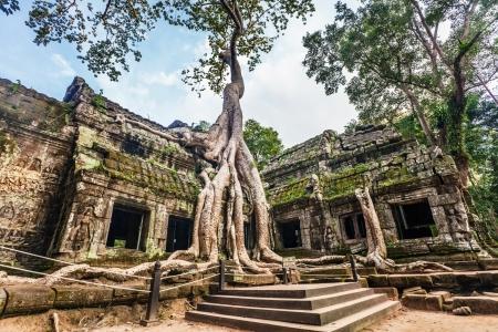 tempels: Klassieke beeld van Ta Prohm tempel, Angkor, Cambodja