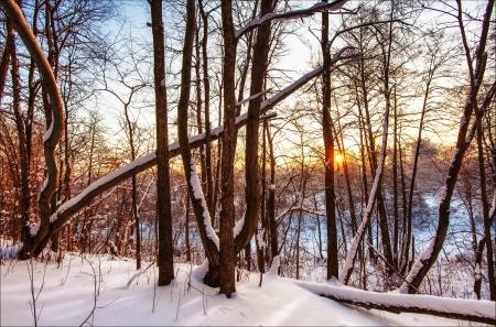 enero: Puesta de sol de invierno cerca de los bosques Foto de archivo