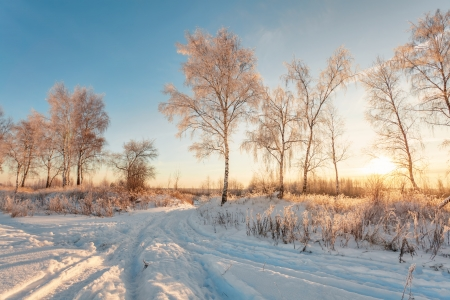 Winter sunset near the forest Stock Photo - 14589258