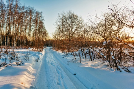 Winter sunset near the forest Stock Photo - 14589266