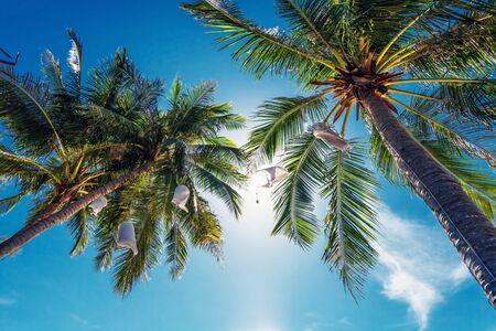 Palm trees on blue sky background Stock Photo - 15505908