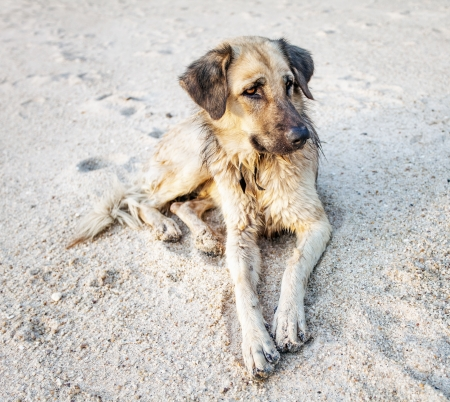 Dog resting on a tropical beach  Stock Photo - 15505845
