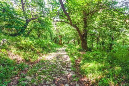 Sunny summer forest with footpath Stock Photo - 15512712