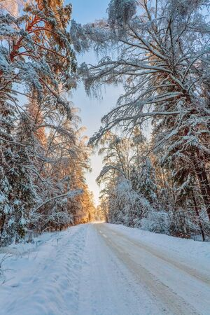 Beautiful winter sunset near the forest. Nature background. Stock Photo - 15399974