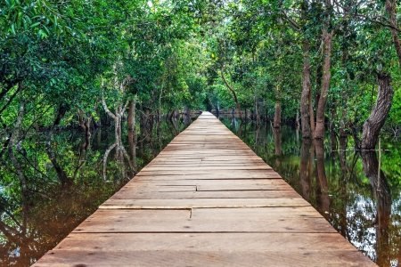 view of a wooden bridge in the Cambodian jungle Stock Photo