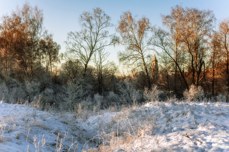 winter field in soft sunset light   Stock Photo - 16217082