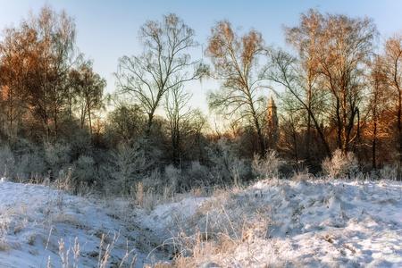 winter field in soft sunset light Stock Photo - 16217082