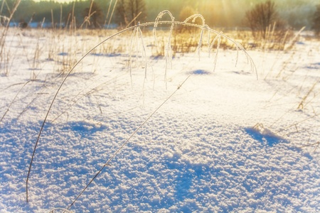winter field in soft sunset light   Stock Photo - 16217077