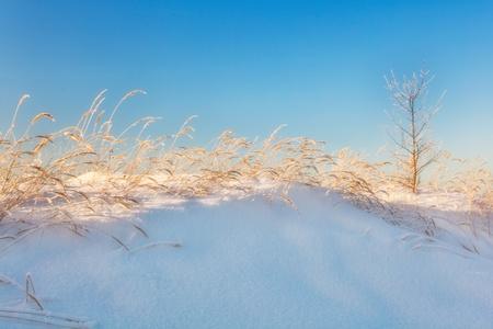 winter field in soft sunset light Stock Photo - 16217076