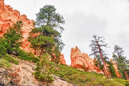Slopes of Bryce Canyon  Utah  USA  Stock Photo - 16217073