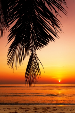 Tropical beach at beautiful sunset  Nature background  Stock Photo - 16451781