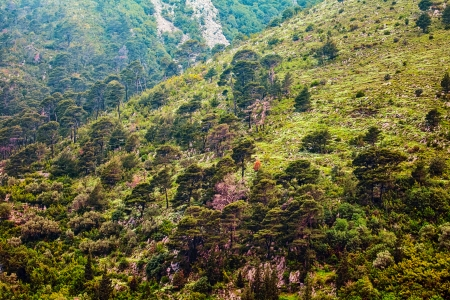 Mountain slopes with trees Stock Photo - 16451827