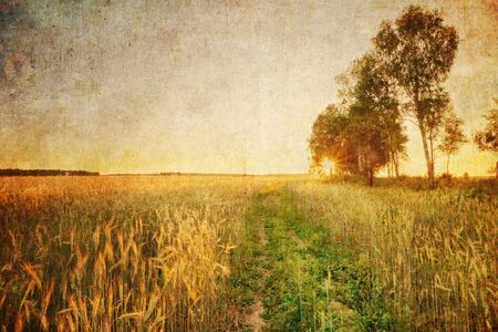 Coloful sunset in summer field with rye in grunge and retro style Stock Photo - 17013511