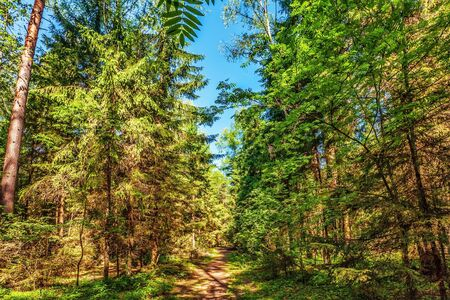 Summer forest in sunny weather Stock Photo - 17703199