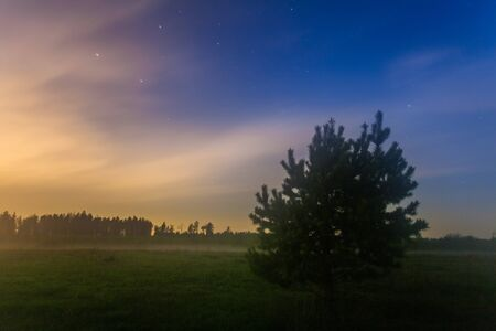 nightly landscape with stars, fog, field and grass Stock Photo - 17703193