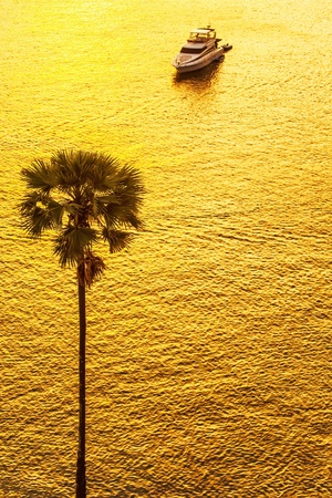 Silhouette of a palm tree against boat in sunset light Stock Photo - 17956632