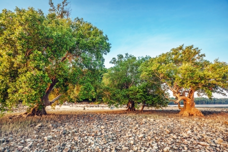 treees on sea shore after ebb in sunset light Stock Photo - 17956656