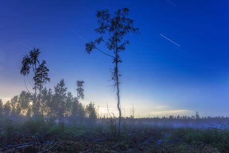 nightly: nightly landscape with foggy field and grass