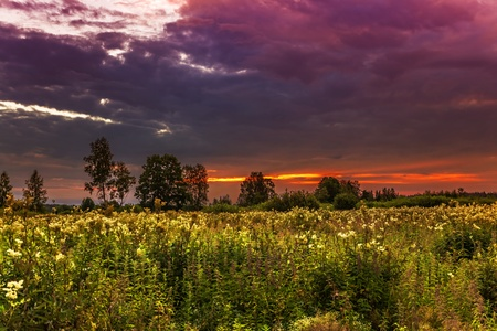Landscape with coloful sunset in summer field  Stock Photo - 18345794