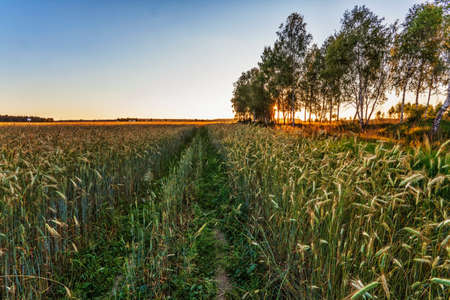 Landscape with coloful sunset in summer field Stock Photo - 18345966