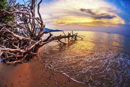 Tropical beach at beautiful sunset. Nature background Stock Photo - 18456276