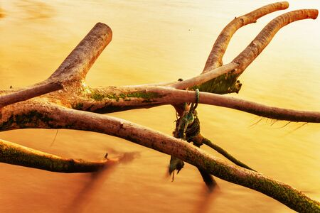 old tree trunk in water in sunset light Stock Photo - 18456257