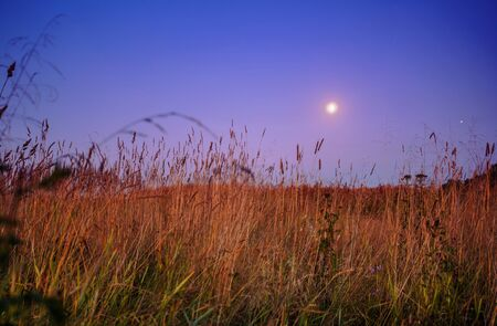 nightly landscape with field and grass Stock Photo - 18619076