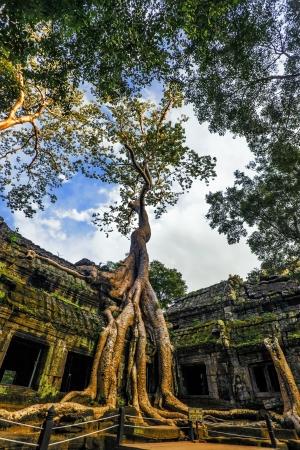 Classical picture of Ta Prohm Temple, Angkor, Cambodia Stock Photo - 18939566