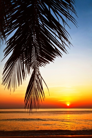 Tropical beach at beautiful sunset. Nature background  Stock Photo - 18910706