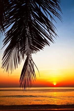 Tropical beach at beautiful sunset. Nature background Stock Photo - 18910706