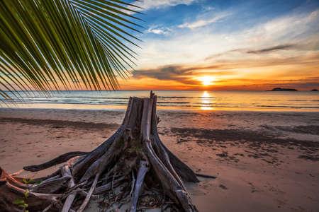 Tropical beach at beautiful sunset  Nature background  photo
