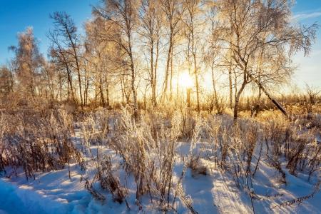 silhouette arbre hiver: Coucher de soleil d'hiver pr?s de la for?t Banque d'images