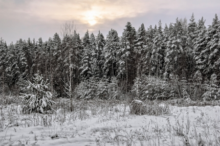 Winter gloomy sunset near the forest photo