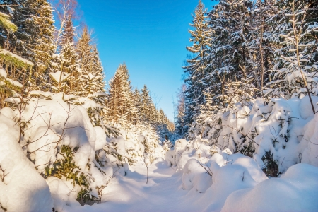 Winter forest  Nature background photo