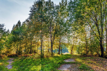 environmen: Summer forest in sunny weather