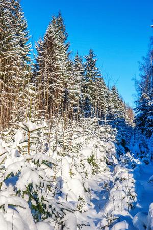 snowdrifts: winter landscape with snowdrifts and deep blue sky