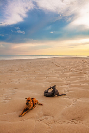 Dogs on the beach under sunset gloomy sky photo