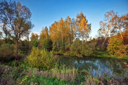 yellow trees: autumnal river with yellow trees under blue sky
