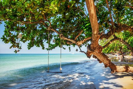 Swings at tree on the sand tropical beach photo