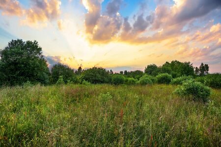 grass flower: Landscape with coloful sunset in summer field