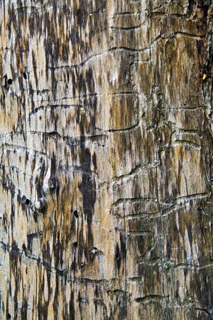 parasites: surface of the wood with traces of parasites