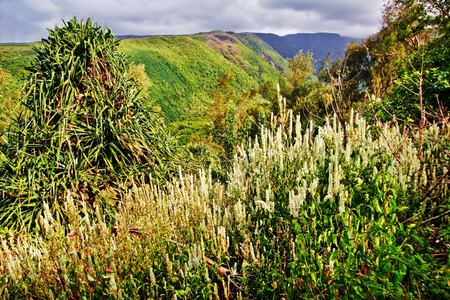 mounts: Mounts and jungle in gloomy weather. Big island. Hawaii. USA