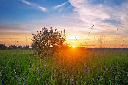 coloful: Landscape with coloful sunset in summer field