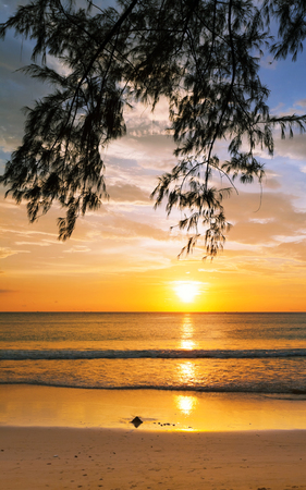 ebb: Tropical beach in ebb time on sunset background