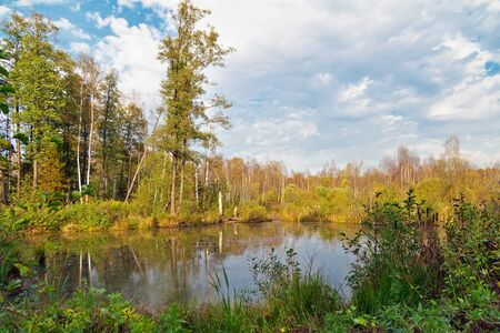 wide  wet: Autumnal forest swamp in forest under cloudy sky
