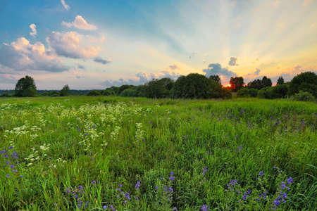 coloful: Landscape with coloful sunset in summer field with flowers