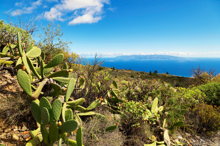 Prickly pear on a mountain slope under the blue sky. Tenerife, Spain