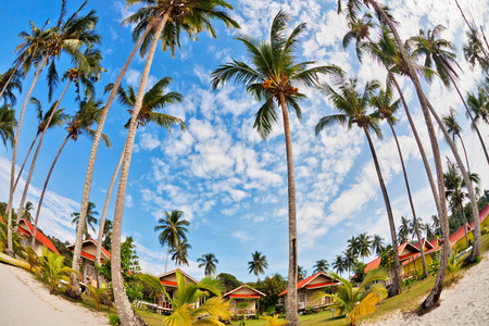 fisheye view on beach with palms under blue sky